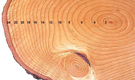 Counting Rings Of Tree Core